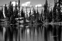 Mt Rainier thru trees black and white